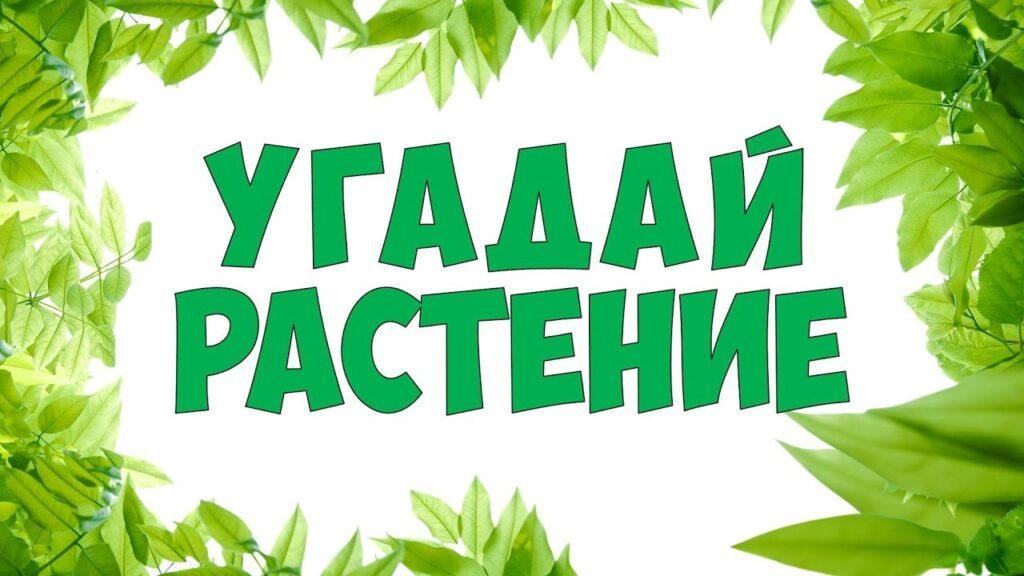 Онлайн-викторина «Угадай растение!»