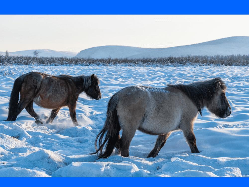 Онлайн-путешествие «К полюсу холода: история, культура, традиции народа саха»